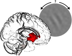 Probanden lösen Wahrnehmungsaufgaben: Die eigene Zuversicht über die Orientierung eines visuellen Reizes aktiviert hierbei eine Gehirnregion im limbischen System. Copyright Charité