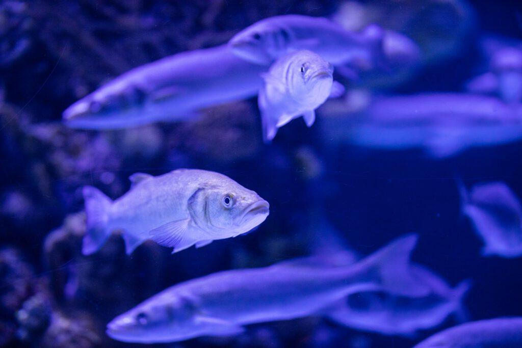 Fische im Aquarium Foto von Engin Akyurt von Pexels