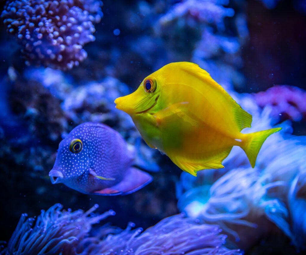 2 bunte Fische im Wasser.  Foto von Egor Kamelev von Pexels